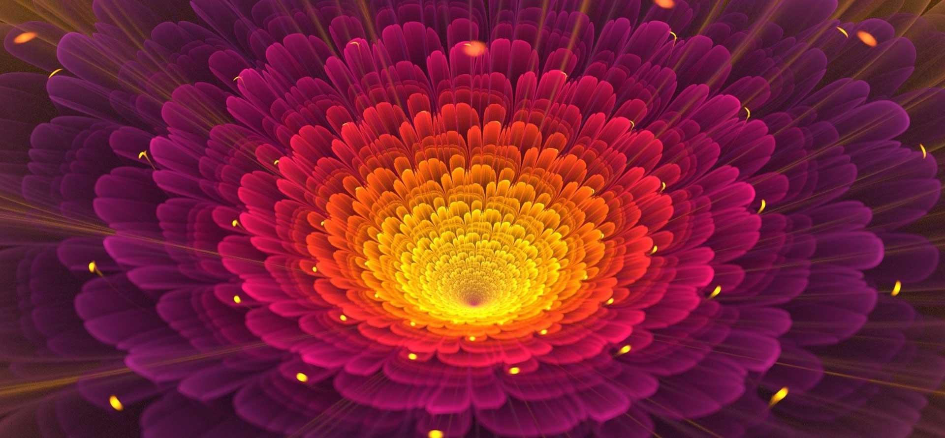 Wide Open Flower